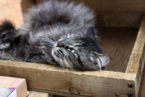行政収容猫訪問_d0355333_11013294.jpg
