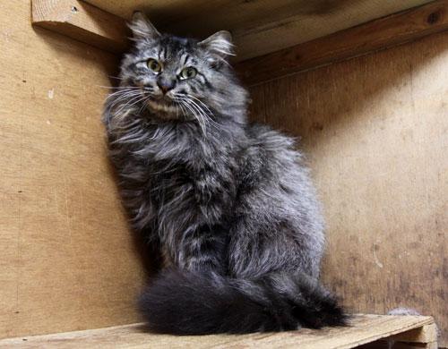 行政収容猫訪問_d0355333_11013303.jpg
