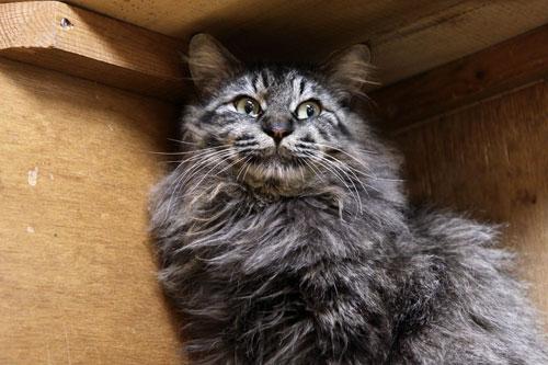 行政収容猫訪問_d0355333_11013370.jpg
