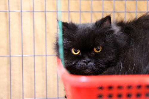 行政収容猫訪問_d0355333_11013461.jpg