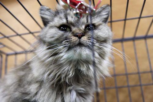 行政収容猫訪問_d0355333_11013476.jpg