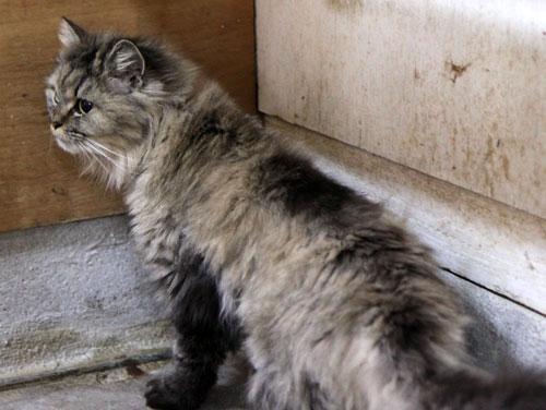 行政収容猫訪問_d0355333_11013504.jpg