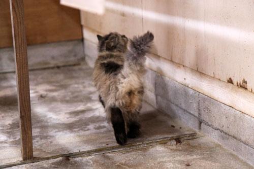 行政収容猫訪問_d0355333_11013509.jpg