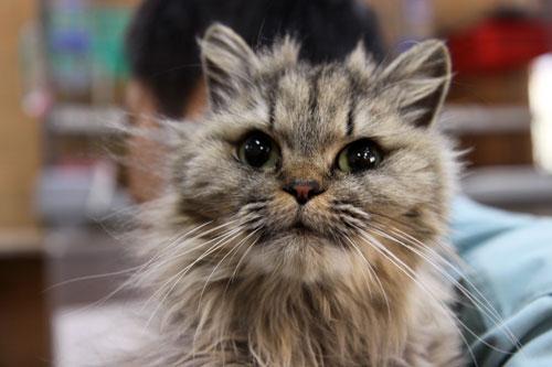 行政収容猫訪問_d0355333_11013637.jpg
