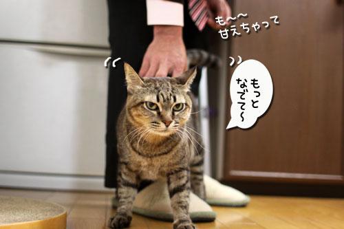 どんどん甘えん坊合戦_d0355333_11015718.jpg