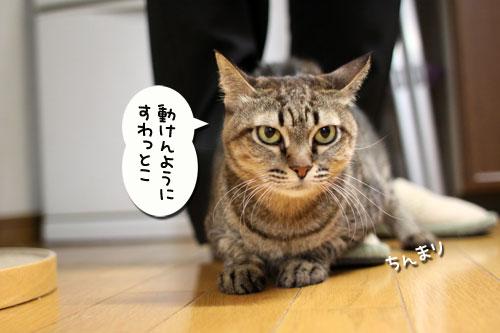 どんどん甘えん坊合戦_d0355333_11015824.jpg