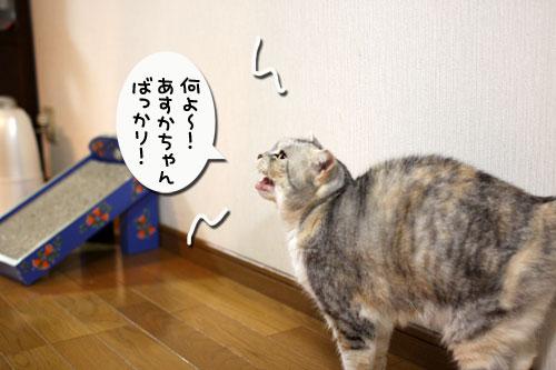 どんどん甘えん坊合戦_d0355333_11015881.jpg