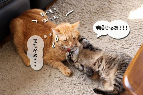動画★生バトル_d0355333_11020226.jpg