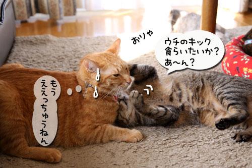動画★生バトル_d0355333_11020228.jpg