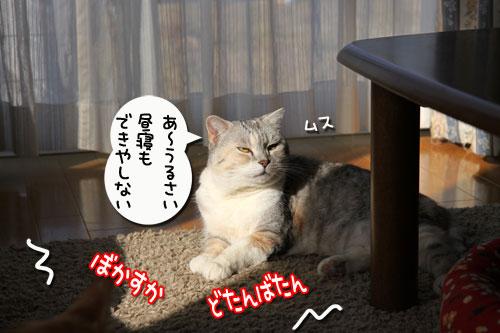 動画★生バトル_d0355333_11020283.jpg