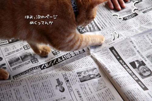 朝刊攻防戦_d0355333_11023571.jpg