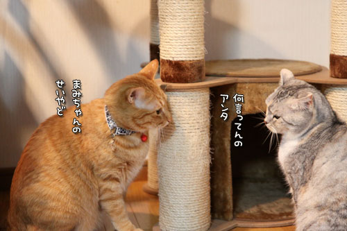 朝刊攻防戦_d0355333_11023694.jpg