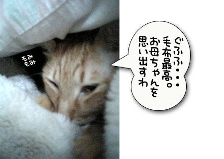 つい、寝坊しちゃうとき_d0355333_11024659.jpg