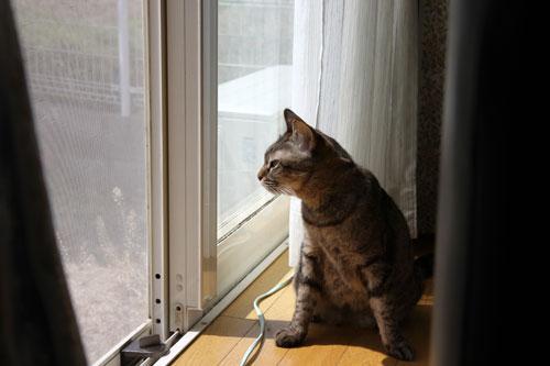 猫警備員に要注意_d0355333_11024913.jpg