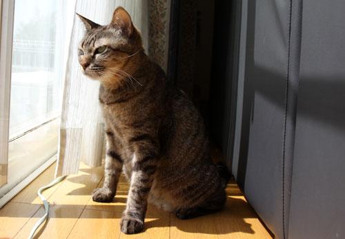 猫警備員に要注意_d0355333_11024938.jpg