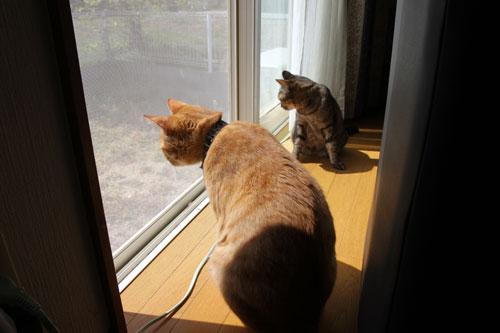 猫警備員に要注意_d0355333_11024952.jpg