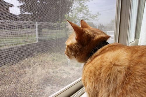 猫警備員に要注意_d0355333_11024970.jpg