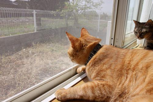 猫警備員に要注意_d0355333_11025066.jpg