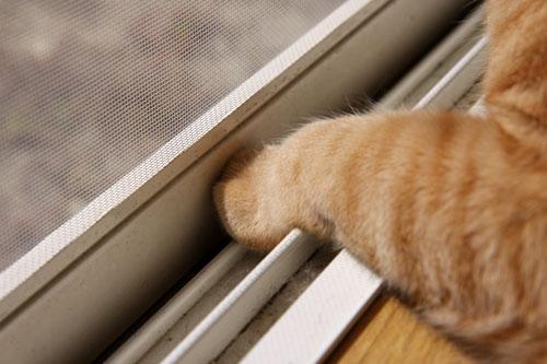 猫警備員に要注意_d0355333_11025094.jpg