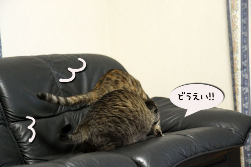 我が家の猫ボクサー_d0355333_11035023.jpg