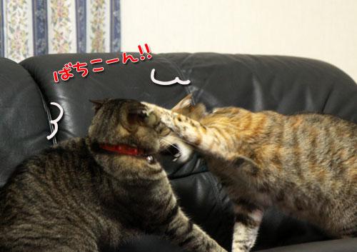 我が家の猫ボクサー_d0355333_11035133.jpg