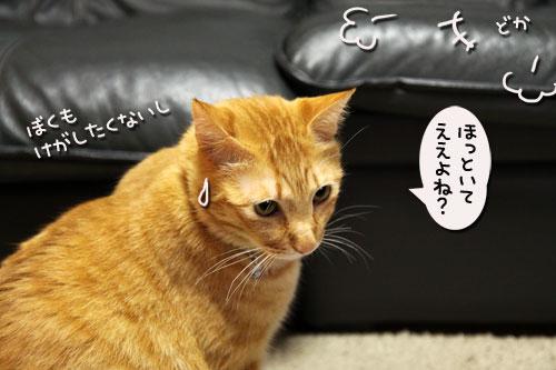 我が家の猫ボクサー_d0355333_11035207.jpg