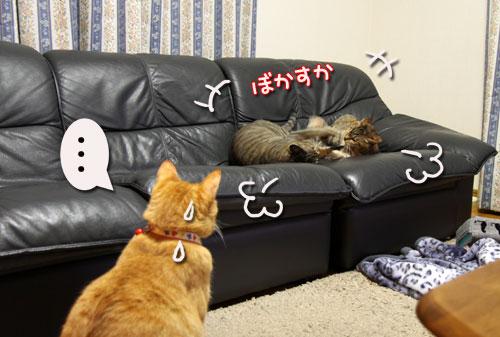 我が家の猫ボクサー_d0355333_11035245.jpg