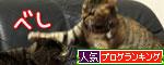 我が家の猫ボクサー_d0355333_11035318.jpg