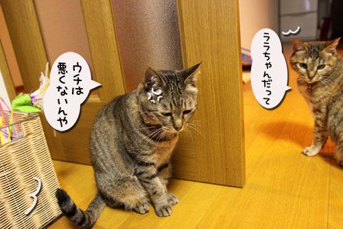 我が家の猫ボクサー_d0355333_11035357.jpg