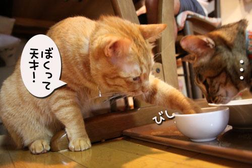 猫の手貸します、有料で_d0355333_11035385.jpg