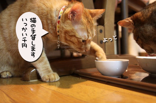 猫の手貸します、有料で_d0355333_11035414.jpg