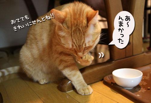 猫の手貸します、有料で_d0355333_11035459.jpg
