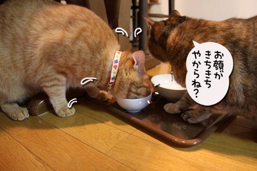 猫の手貸します、有料で_d0355333_11035474.jpg