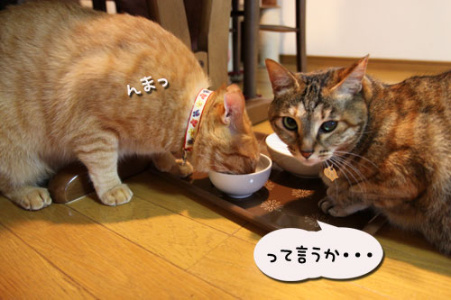 猫の手貸します、有料で_d0355333_11035484.jpg