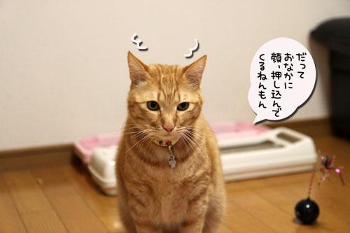 暴風雨の夕方に★後編_d0355333_11043093.jpg