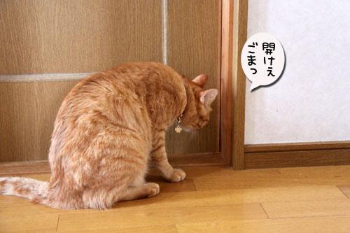 ちゃとらんと引き戸★猫動画_d0355333_11043358.jpg