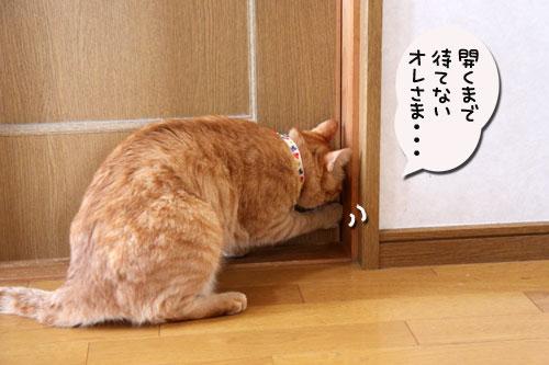 ちゃとらんと引き戸★猫動画_d0355333_11043389.jpg