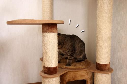 能ある猫は・・・_d0355333_11045100.jpg