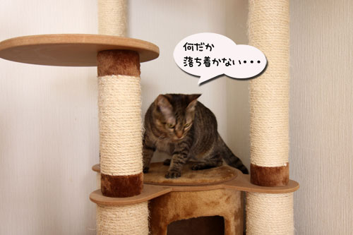能ある猫は・・・_d0355333_11045152.jpg