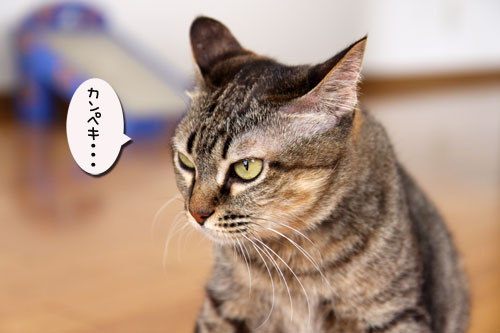 能ある猫は・・・_d0355333_11045256.jpg