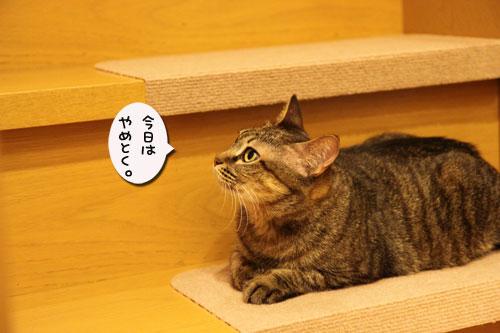 階段滑り止めマットの新しい使い方_d0355333_11045571.jpg