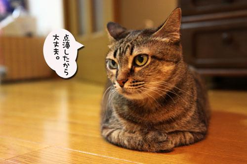 いよいよ北海道へ_d0355333_11050252.jpg