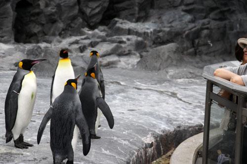 旭山動物園で見たものは_d0355333_11050519.jpg