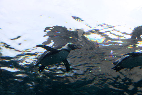 旭山動物園で見たものは_d0355333_11050528.jpg