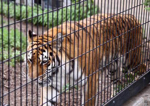旭山動物園で見たものは_d0355333_11050532.jpg