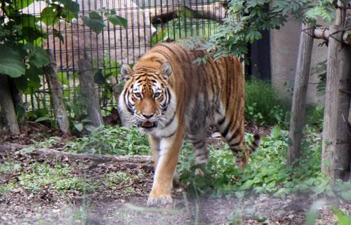 旭山動物園で見たものは_d0355333_11050555.jpg
