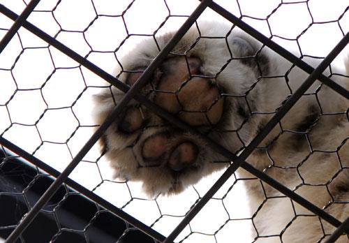 旭山動物園で見たものは_d0355333_11050607.jpg