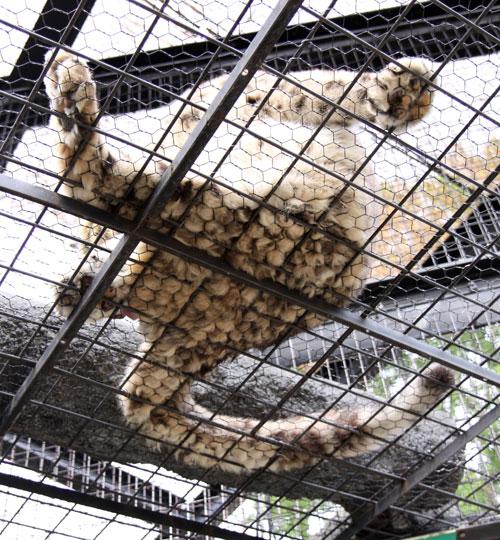 旭山動物園で見たものは_d0355333_11050629.jpg