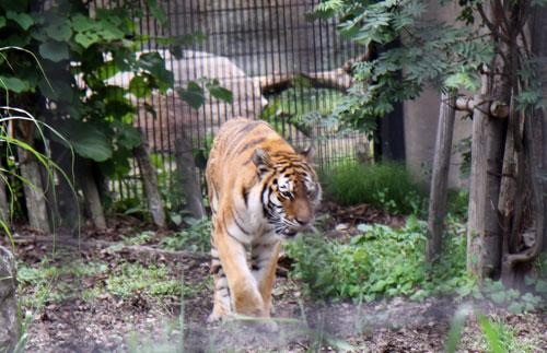 旭山動物園で見たものは_d0355333_11050648.jpg