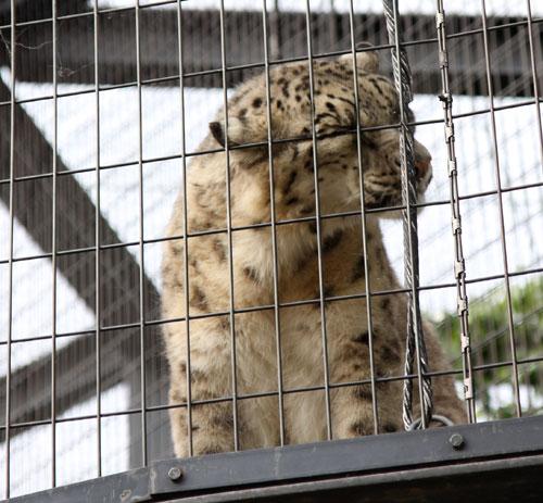 旭山動物園で見たものは_d0355333_11050661.jpg